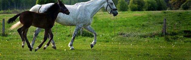 pferde op versicherung, pferdeversicherung,, tierversicherung, tierlebensversicherung