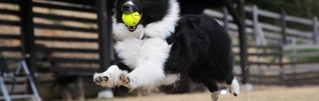 Tierhalterhaftpflichtversicherung, Hundehaftpflichtversicherung